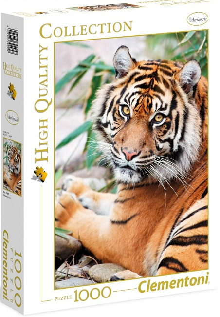 1000 Tigre de Sumatra. HIGH QUALITY